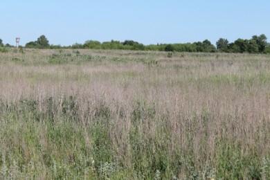 Более 70 земельных участков, предоставленных для строительства в Гомеле и его пригороде, не используются