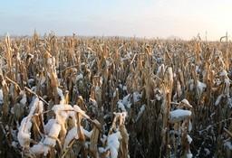 В ходе проведенных контрольно-аналитических мероприятий специалистами КГК Брестской области выявлены многочисленные нарушения отраслевых регламентов уборки сельскохозяйственных культур