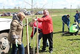 В рамках проведения республиканского субботника работники КГК Гродненской области осуществили посадку деревьев на улице Белые Росы в г. Гродно.