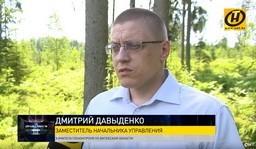 Белорусский лес. Что для него опаснее: короед, пожары или человек? // По справедливости