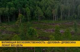 Комитет госконтроля совместно с Государственной инспекцией охраны животного и растительного мира зафиксировали факты бесхозяйственности в Климовичском лесхозе.